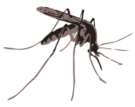 West Nile Virus found, risk level low
