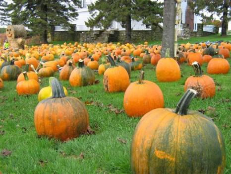 Hunt+for+perfect+pumpkin