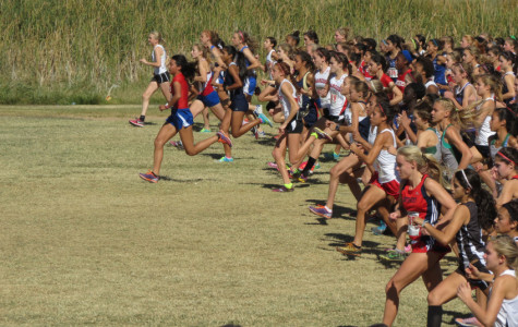 Cross country runners qualify for state competition