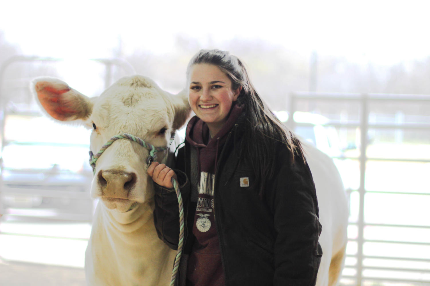 Senior Grace Carver, Vice President of  FFA, shows off one of her cows, Daisy outside of the LISD Agriculture barn in Lewisville. Carver goes to the barn everyday to feed, wash and train her animals.