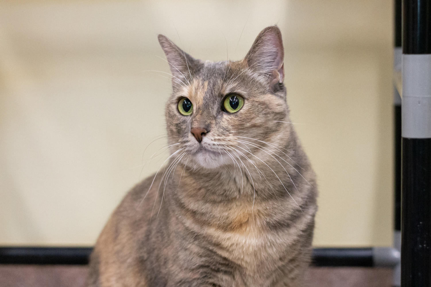 Fifi is very affectionate towards people and likes to explore.