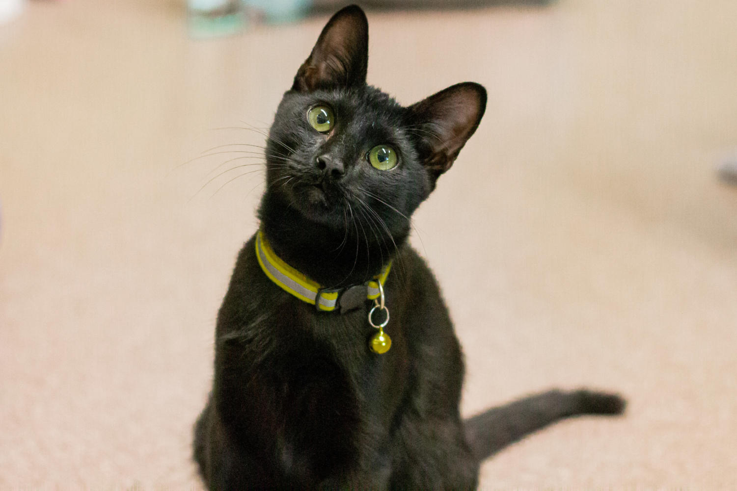 Twister is a ball of energy and loves to play with his toys for hours.