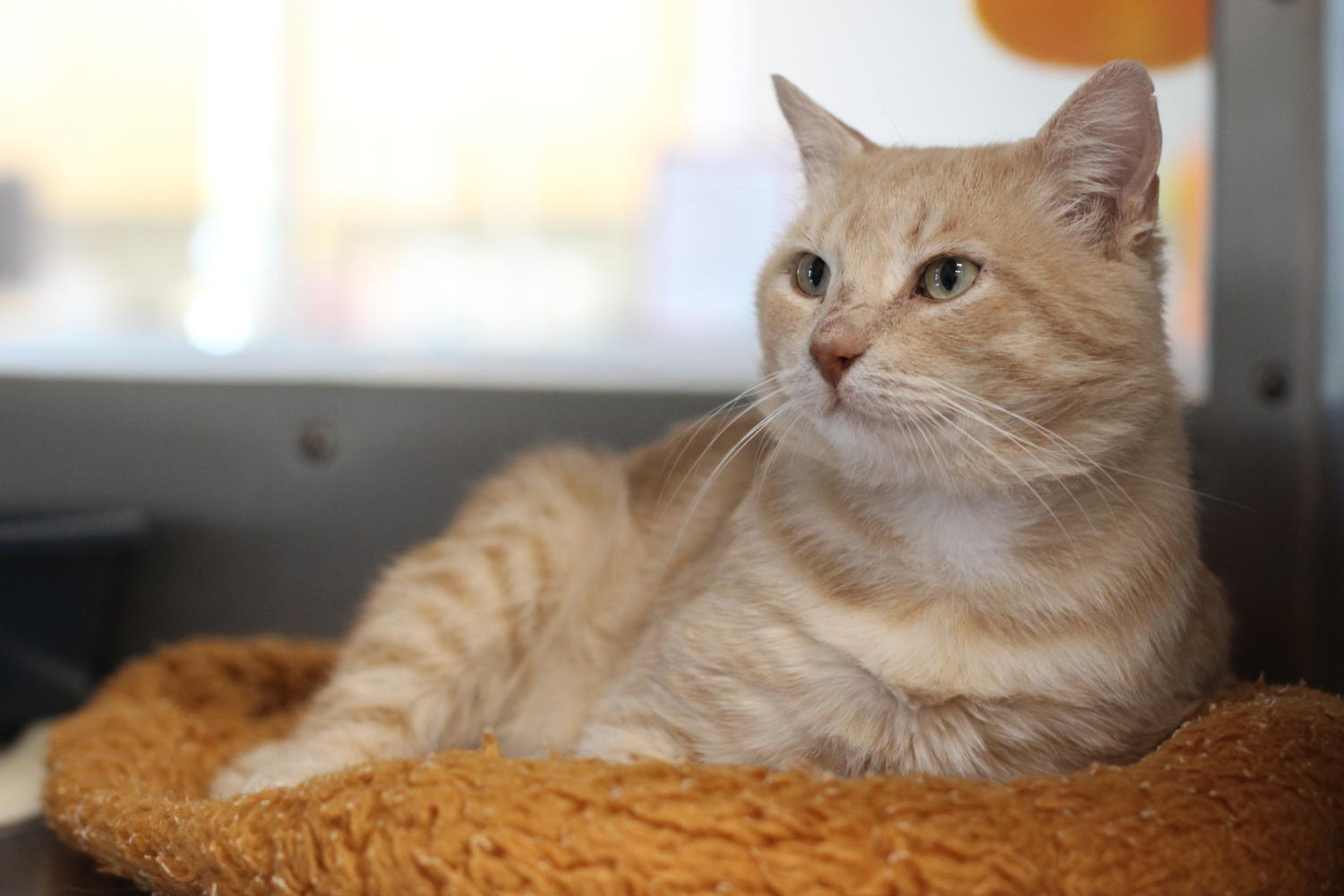 Rip is a very affectionate cat that loves people.
