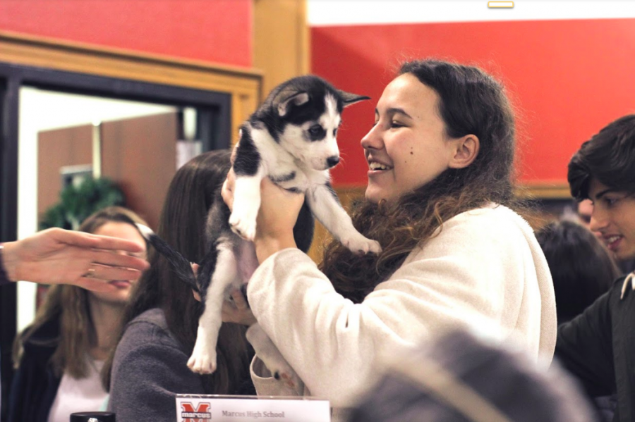 Students+got+to+hold+husky+puppies+in+the+library+the+morning+before+finals.+The+puppies+were+brought+in+by+English+teacher+and+Texas+Husky+Rescue+Foster+Director+Meghan+Regent.+Students+could+pay+five+dollars+to+hold+the+puppies%2C+and+the+proceeds+would+go+towards+their+medical+bills.