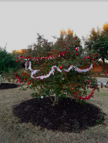 Flower Mound residents used tinsel and ornaments to decorate trees on Morris Road for the holiday season. Students are able to find some of these trees outside of the front of the school.