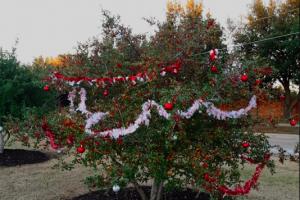 Branching into Christmas season