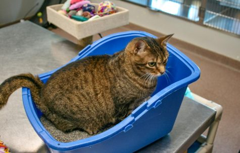 Catniss was a bit camera shy, and chose to stay in her litter box.